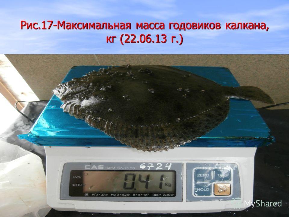 Рис.17-Максимальная масса годовиков калкана, кг (22.06.13 г.)