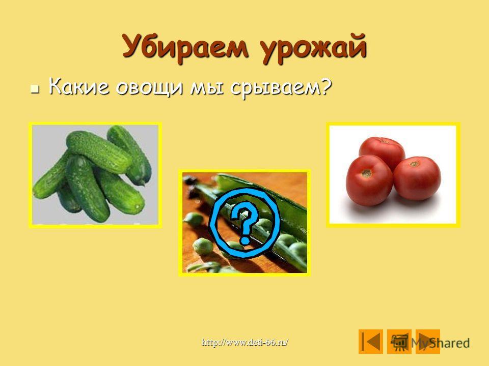 Убираем урожай Какие овощи мы дёргаем? Какие овощи мы дёргаем? http://www.deti-66.ru/