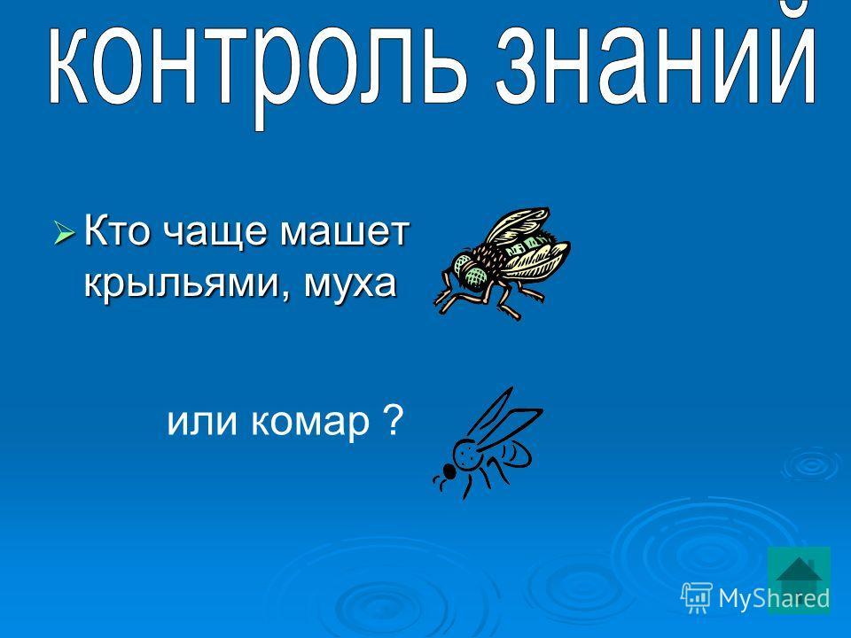 Кто чаще машет крыльями, муха Кто чаще машет крыльями, муха или комар ?