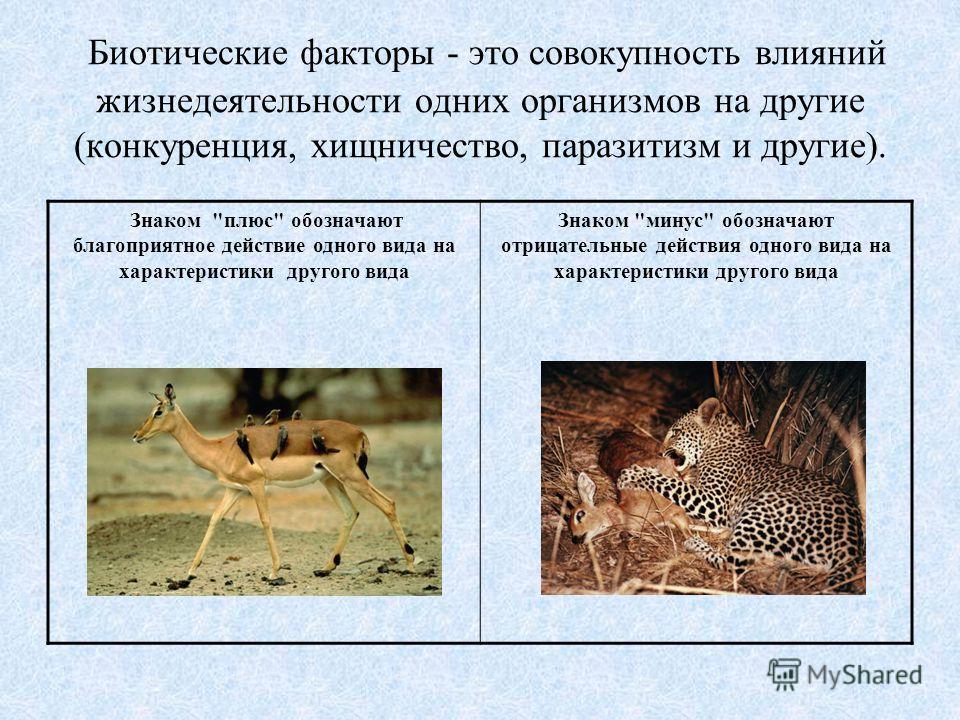 Биотические факторы - это совокупность влияний жизнедеятельности одних организмов на другие (конкуренция, хищничество, паразитизм и другие). Знаком