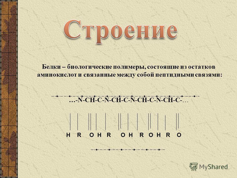 Белки – биологические полимеры, состоящие из остатков аминокислот и связанные между собой пептидными связями: …-N-CH-C-N-CH-C-N-CH-C-N-CH-C-… H R O H R O H R O H R O