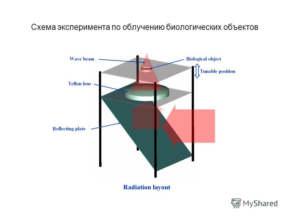 Схема эксперимента по облучению биологических объектов