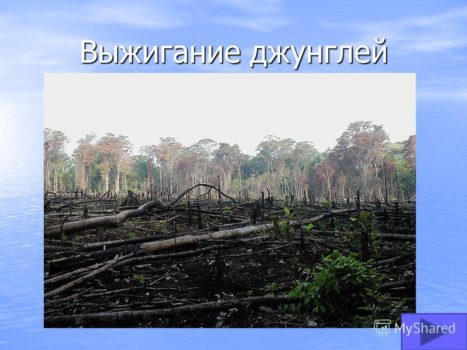 Выжигание джунглей
