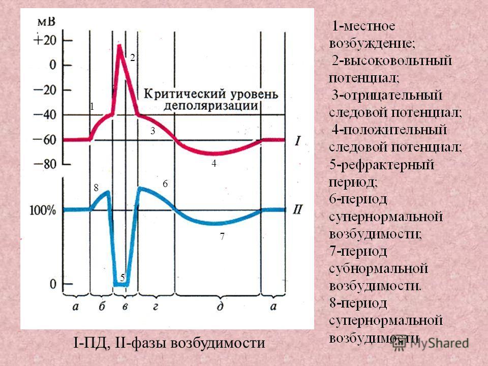 I-ПД, II-фазы возбудимости 1 2 3 4 5 6 7 8