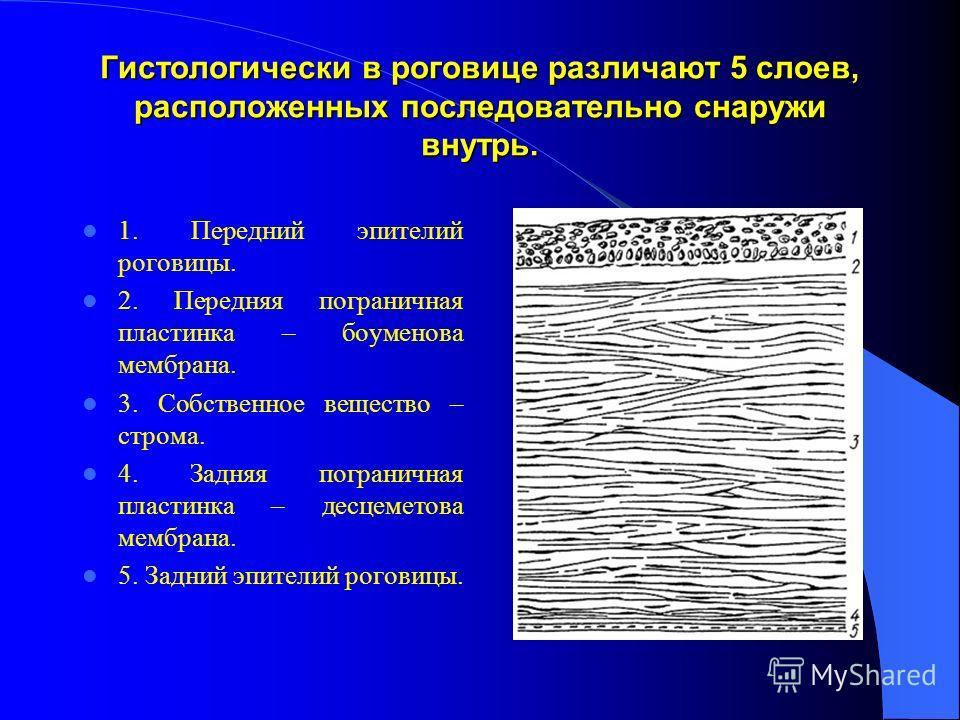 Гистологически в роговице различают 5 слоев, расположенных последовательно снаружи внутрь. 1. Передний эпителий роговицы. 2. Передняя пограничная пластинка – боуменова мембрана. 3. Собственное вещество – строма. 4. Задняя пограничная пластинка – десц