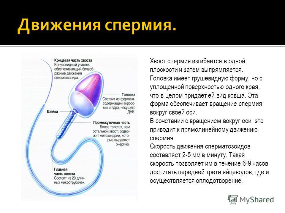 Сколько живет сперматозоид на поверхности уролог предложить