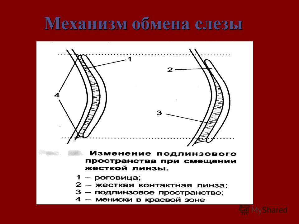 Механизмобменаслезы Механизм обмена слезы