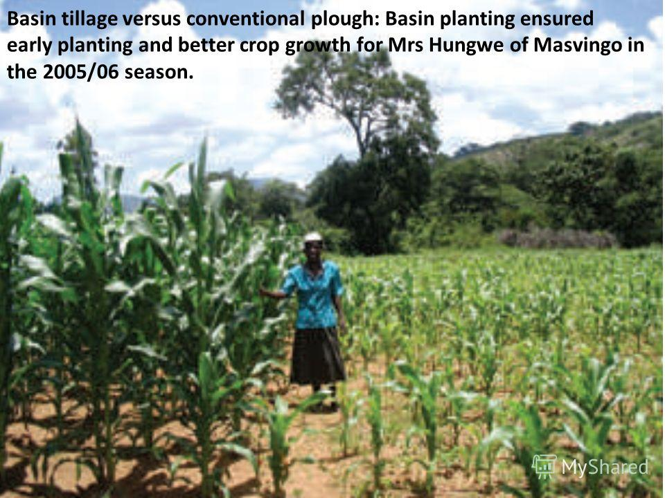 Basin tillage versus conventional plough: Basin planting ensured early planting and better crop growth for Mrs Hungwe of Masvingo in the 2005/06 season.