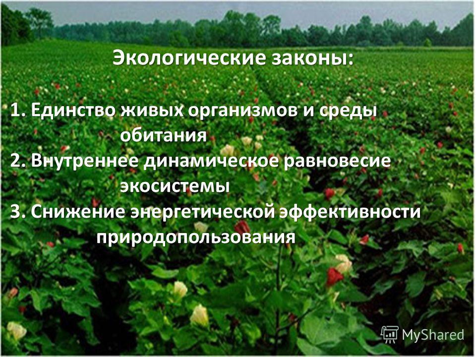 Экологические законы: Экологические законы: 1. Единство живых организмов и среды 1. Единство живых организмов и среды обитания обитания 2. Внутреннее динамическое равновесие 2. Внутреннее динамическое равновесие экосистемы экосистемы 3. Снижение энер