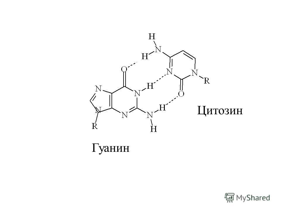 Образование МВС между достаточно сложными молекулами требует их структурного соответствия (комплементарности). Комплементарность – пространственное соответствие структур двух молекул (разных или одинаковых), благодаря которому возможно образование ме