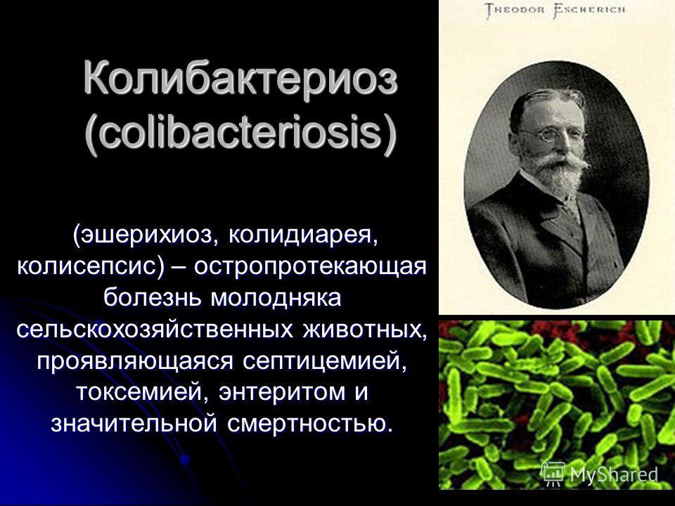 Колибактериоз (colibacteriosis) (эшерихиоз, колидиарея, колисепсис) – остропротекающая болезнь молодняка сельскохозяйственных животных, проявляющаяся септицемией, токсемией, энтеритом и значительной смертностью. (эшерихиоз, колидиарея, колисепсис) –