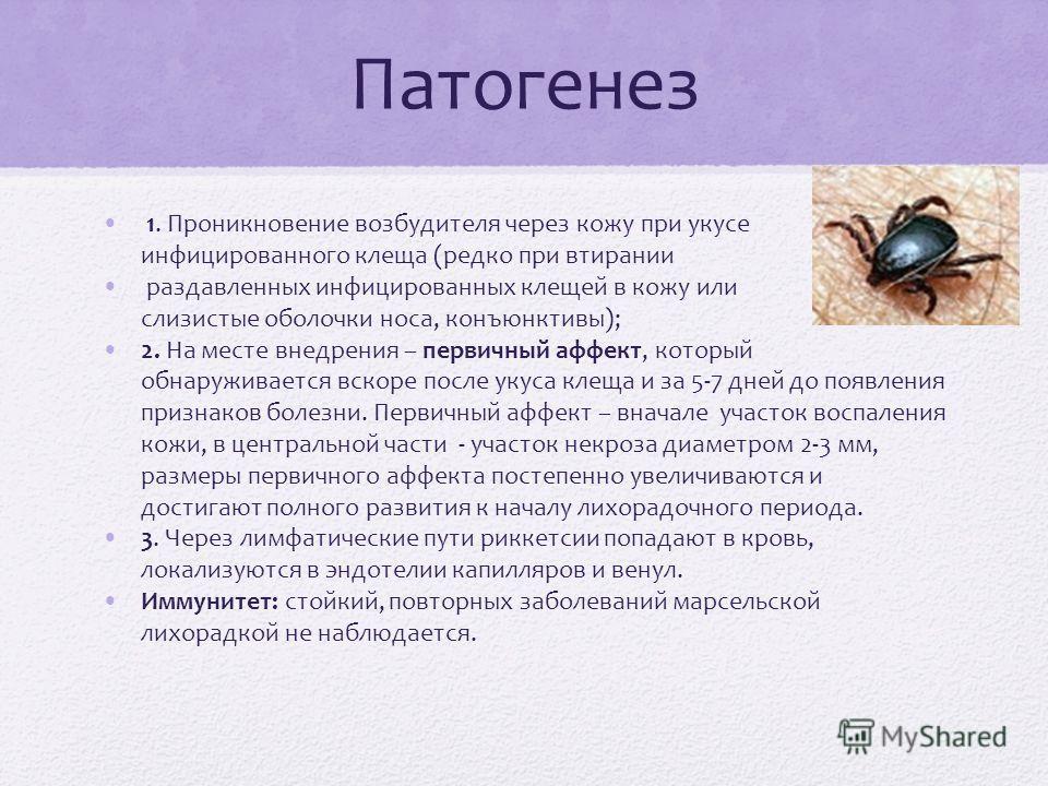 Патогенез 1. Проникновение возбудителя через кожу при укусе инфицированного клеща (редко при втирании раздавленных инфицированных клещей в кожу или слизистые оболочки носа, конъюнктивы); 2. На месте внедрения – первичный аффект, который обнаруживаетс