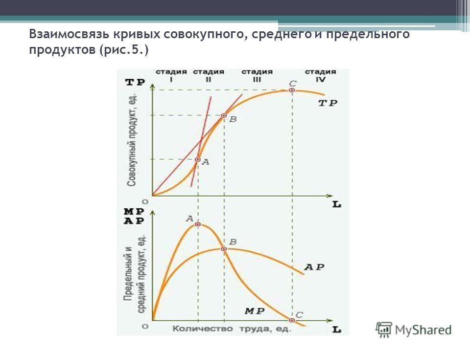 Взаимосвязь кривых совокупного, среднего и предельного продуктов (рис.5.)