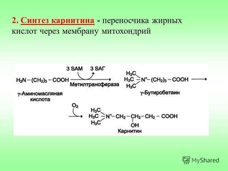 2. Синтез карнитина - переносчика жирных кислот через мембрану митохондрий
