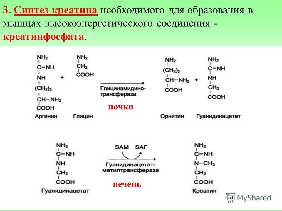 3. Синтез креатина необходимого для образования в мышцах высокоэнергетического соединения - креатинфосфата. Синтез креатина идет в 2 стадии с участием 3 АМК: аргинина, глицина и метионина. В почках образуется гуанидин-ацетат при действии глицин-амиди