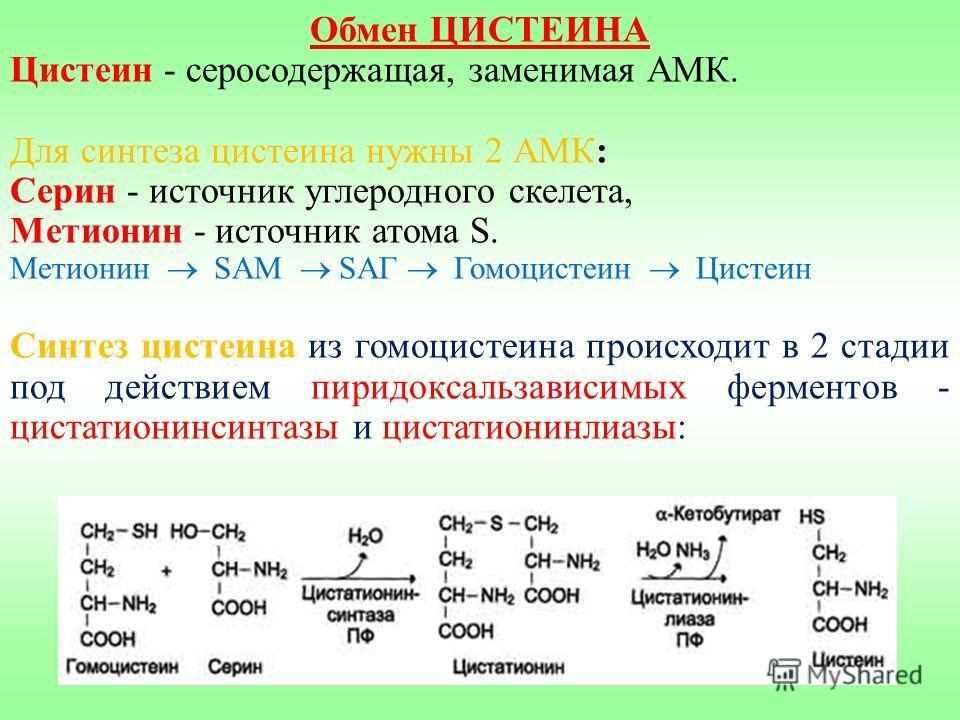 Обмен ЦИСТЕИНА Цистеин - серосодержащая, заменимая АМК. Для синтеза цистеина нужны 2 АМК: Серин - источник углеродного скелета, Метионин - источник атома S. Метионин SAM SAГ Гомоцистеин Цистеин Синтез цистеина из гомоцистеина происходит в 2 стадии по
