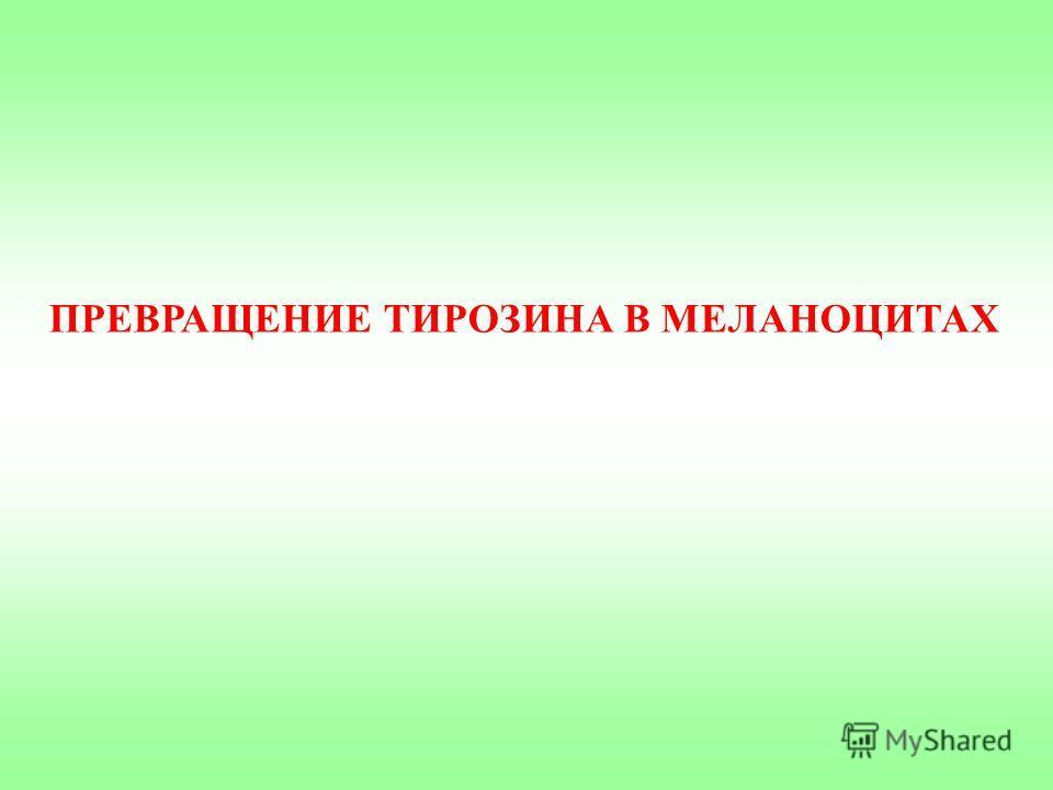 ПРЕВРАЩЕНИЕ ТИРОЗИНА В МЕЛАНОЦИТАХ
