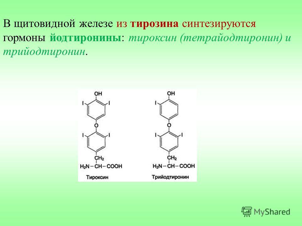 В щитовидной железе из тирозина синтезируются гормоны йодтиронины: тироксин (тетрайодтиронин) и трийодтиронин.