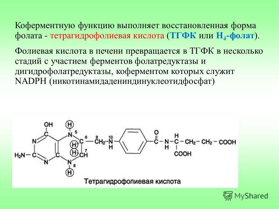 Коферментную функцию выполняет восстановленная форма фолата - тетрагидрофолиевая кислота (ТГФК или Н 4 -фолат). Фолиевая кислота в печени превращается в ТГФК в несколько стадий с участием ферментов фолатредуктазы и дигидрофолатредуктазы, коферментом