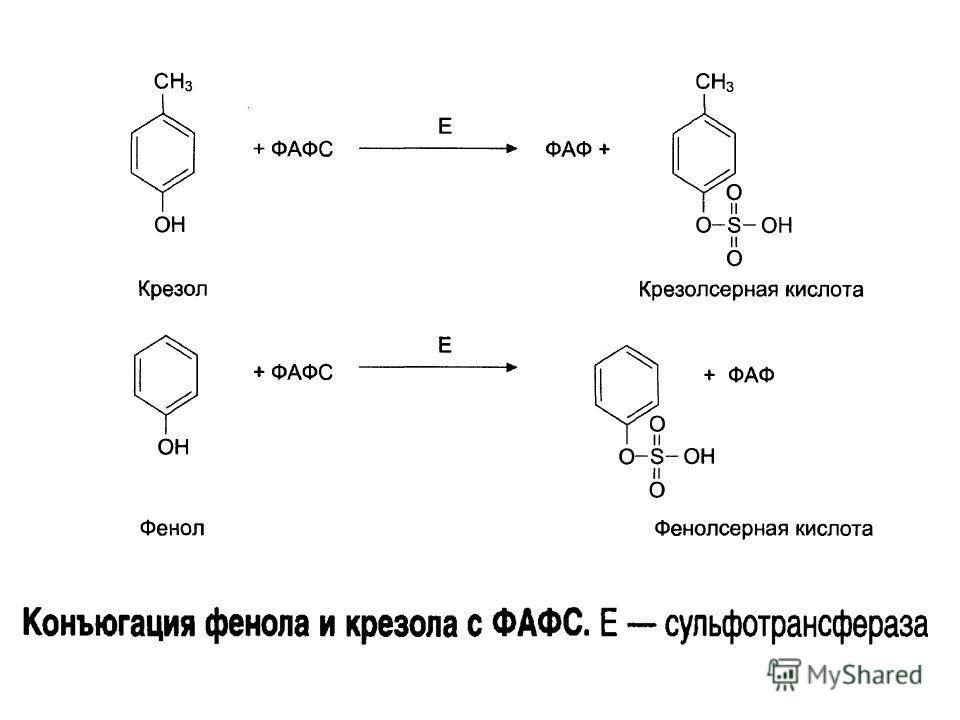 Энтеропептидаза