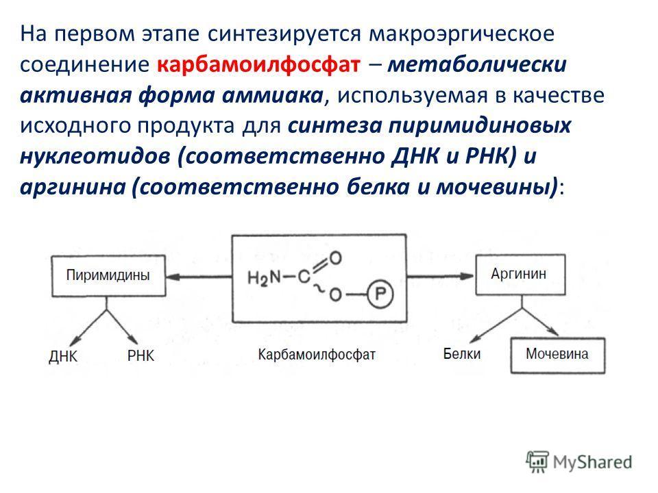 На первом этапе синтезируется макроэргическое соединение карбамоилфосфат – метаболически активная форма аммиака, используемая в качестве исходного продукта для синтеза пиримидиновых нуклеотидов (соответственно ДНК и РНК) и аргинина (соответственно бе