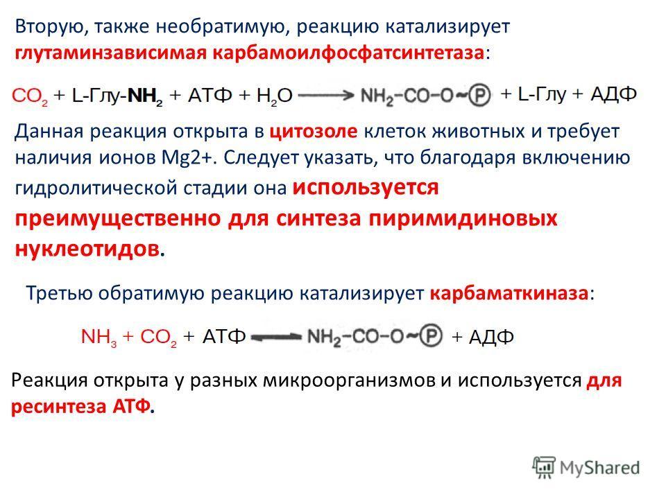 Вторую, также необратимую, реакцию катализирует глутаминзависимая карбамоилфосфатсинтетаза: Данная реакция открыта в цитозоле клеток животных и требует наличия ионов Mg2+. Следует указать, что благодаря включению гидролитической стадии она использует