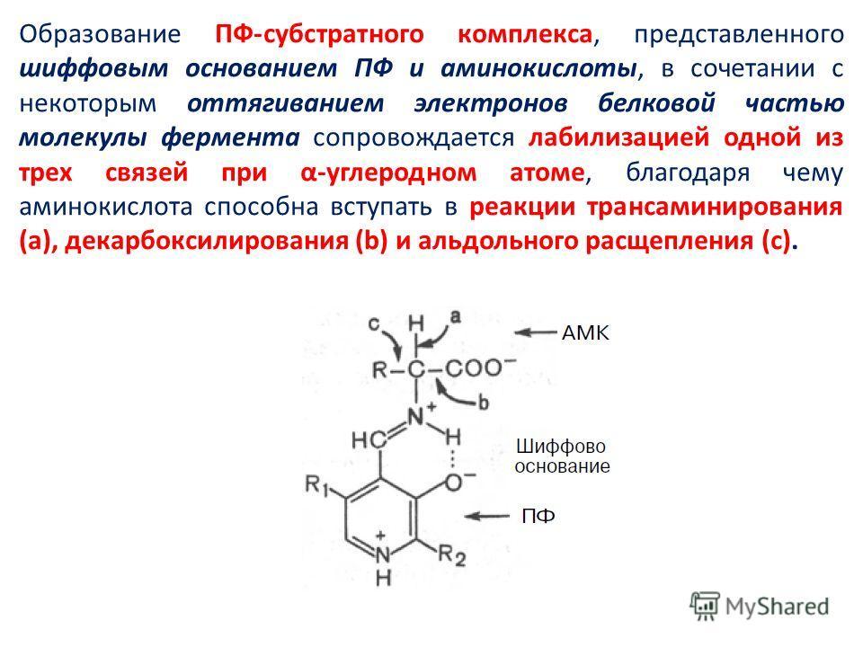 Образование ПФ-субстратного комплекса, представленного шиффовым основанием ПФ и аминокислоты, в сочетании с некоторым оттягиванием электронов белковой частью молекулы фермента сопровождается лабилизацией одной из трех связей при α-углеродном атоме, б