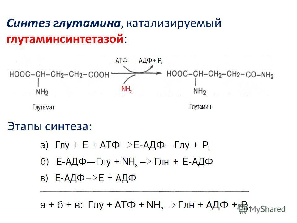 Cинтез глутамина, катализируемый глутаминсинтетазой: Этапы синтеза: