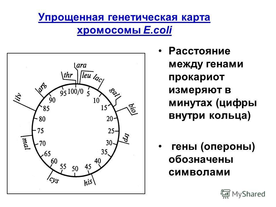 Упрощенная генетическая карта хромосомы E.coli Расстояние между генами прокариот измеряют в минутах (цифры внутри кольца) гены (опероны) обозначены символами