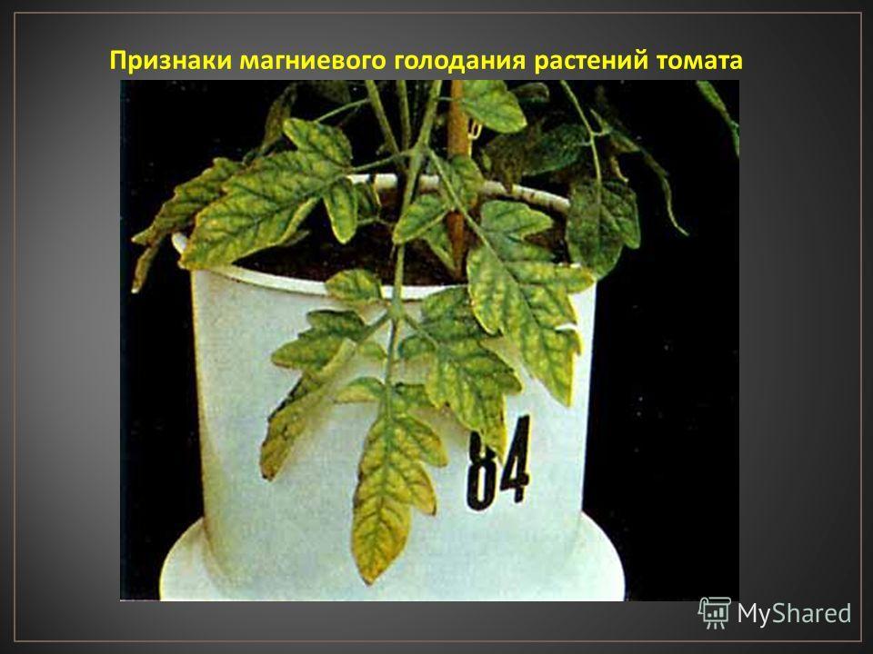 Признаки магниевого голодания растений томата
