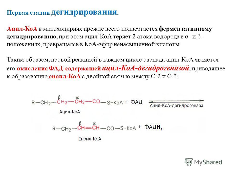 Первая стадия дегидрирования. Ацил-КоА в митохондриях прежде всего подвергается ферментативному дегидрированию, при этом ацил-КоА теряет 2 атома водорода в α- и β- положениях, превращаясь в КоА-эфир ненасыщенной кислоты. Таким образом, первой реакцие