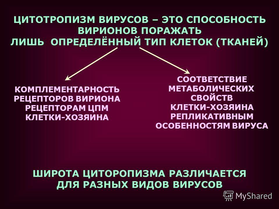 ЦИТОТРОПИЗМ ВИРУСОВ – ЭТО СПОСОБНОСТЬ ВИРИОНОВ ПОРАЖАТЬ ЛИШЬ ОПРЕДЕЛЁННЫЙ ТИП КЛЕТОК (ТКАНЕЙ) КОМПЛЕМЕНТАРНОСТЬ РЕЦЕПТОРОВ ВИРИОНА РЕЦЕПТОРАМ ЦПМ КЛЕТКИ-ХОЗЯИНА СООТВЕТСТВИЕ МЕТАБОЛИЧЕСКИХ СВОЙСТВ КЛЕТКИ-ХОЗЯИНА РЕПЛИКАТИВНЫМ ОСОБЕННОСТЯМ ВИРУСА ШИРО