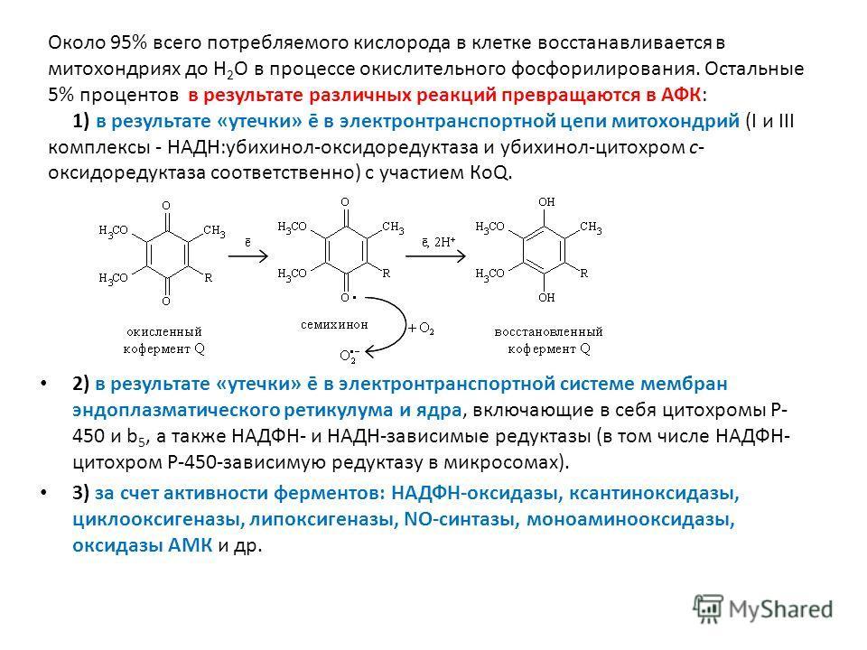 2) в результате «утечки» ē в электронтранспортной системе мембран эндоплазматического ретикулума и ядра, включающие в себя цитохромы Р- 450 и b 5, а также НАДФН- и НАДН-зависимые редуктазы (в том числе НАДФН- цитохром Р-450-зависимую редуктазу в микр