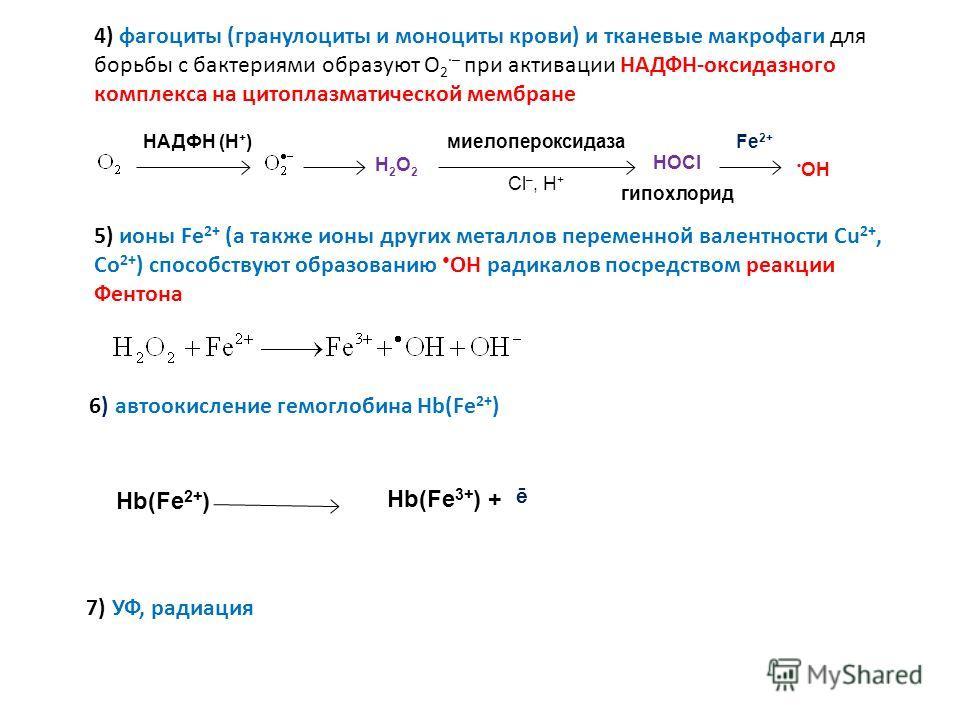 5) ионы Fe 2+ (а также ионы других металлов переменной валентности Cu 2+, Co 2+ ) способствуют образованию ОН радикалов посредством реакции Фентона 6) автоокисление гемоглобина Hb(Fe 2+ ) 7) УФ, радиация НАДФН (Н + ) Н2О2Н2О2 миелопероксидаза Cl –, H
