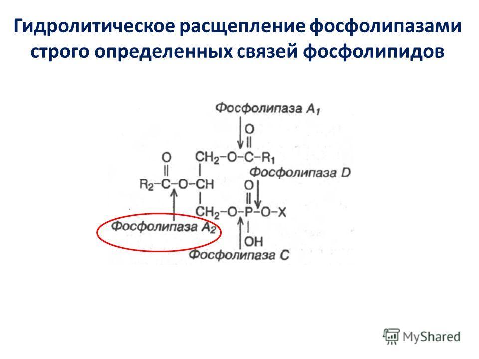 Гидролитическое расщепление фосфолипазами строго определенных связей фосфолипидов
