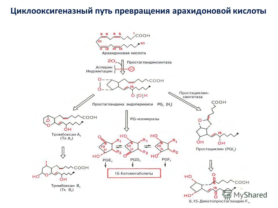 Циклооксигеназный путь превращения арахидоновой кислоты