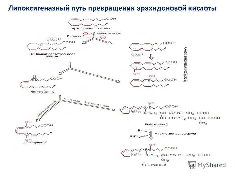 Липоксигеназный путь превращения арахидоновой кислоты