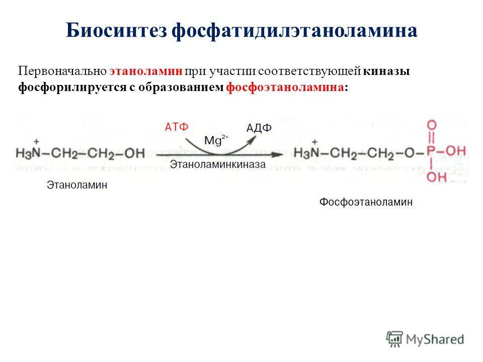 Биосинтез фосфатидилэтаноламина Первоначально этаноламин при участии соответствующей киназы фосфорилируется с образованием фосфоэтаноламина:
