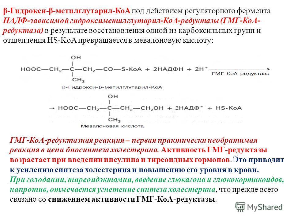 β-Гидрокси-β-метилглутарил-КоА под действием регуляторного фермента НАДФ-зависимой гидроксиметилглутарил-КоА-редуктазы (ГМГ-КоА- редуктаза) в результате восстановления одной из карбоксильных групп и отщепления HS-KoA превращается в мевалоновую кислот