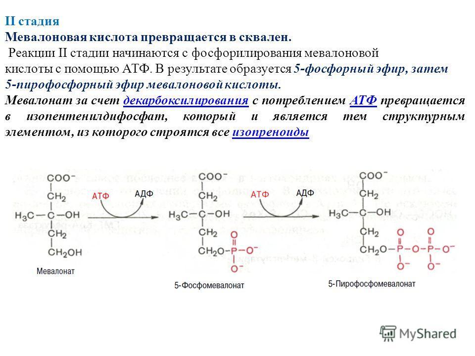 II стадия Мевалоновая кислота превращается в сквален. Реакции II стадии начинаются с фосфорилирования мевалоновой кислоты с помощью АТФ. В результате образуется 5-фосфорный эфир, затем 5-пирофосфорный эфир мевалоновой кислоты. Мевалонат за счет декар