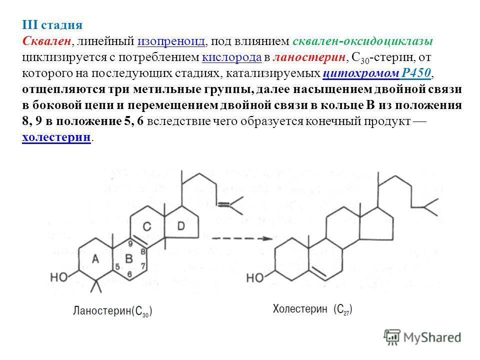 III стадия Сквален, линейный изопреноид, под влиянием сквален-оксидоциклазы циклизируется с потреблением кислорода в ланостерин, С 30 -стерин, от которого на последующих стадиях, катализируемых цитохромом Р450, отщепляются три метильные группы, далее