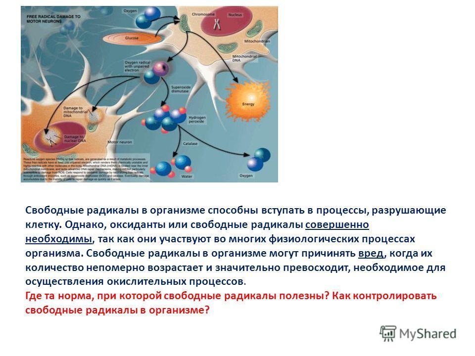 Свободные радикалы в организме способны вступать в процессы, разрушающие клетку. Однако, оксиданты или свободные радикалы совершенно необходимы, так к