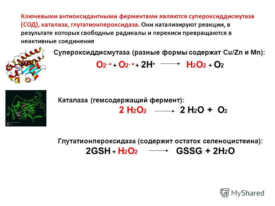 Ключевыми антиоксидантными ферментами являются супероксиддисмутаза (СОД), каталаза, глутатионпероксидаза. Они катализируют реакции, в результате которых свободные радикалы и перекиси превращаются в неактивные соединения Супероксиддисмутаза (разные фо