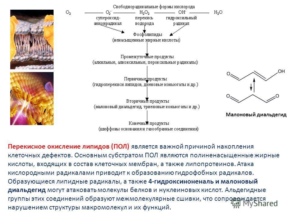 ПЕРЕКИСНОЕ ОКИСЛЕНИЕ ЛИПИДОВ Малоновый диальдегид Перекисное окисление липидов (ПОЛ) является важной причиной накопления клеточных дефектов. Основным субстратом ПОЛ являются полиненасыщенные жирные кислоты, входящих в состав клеточных мембран, а такж