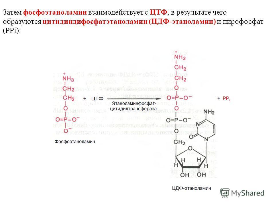 Затем фосфоэтаноламин взаимодействует с ЦТФ, в результате чего образуются цитидиндифосфатэтаноламин (ЦДФ-этаноламин) и пирофосфат (PPi):
