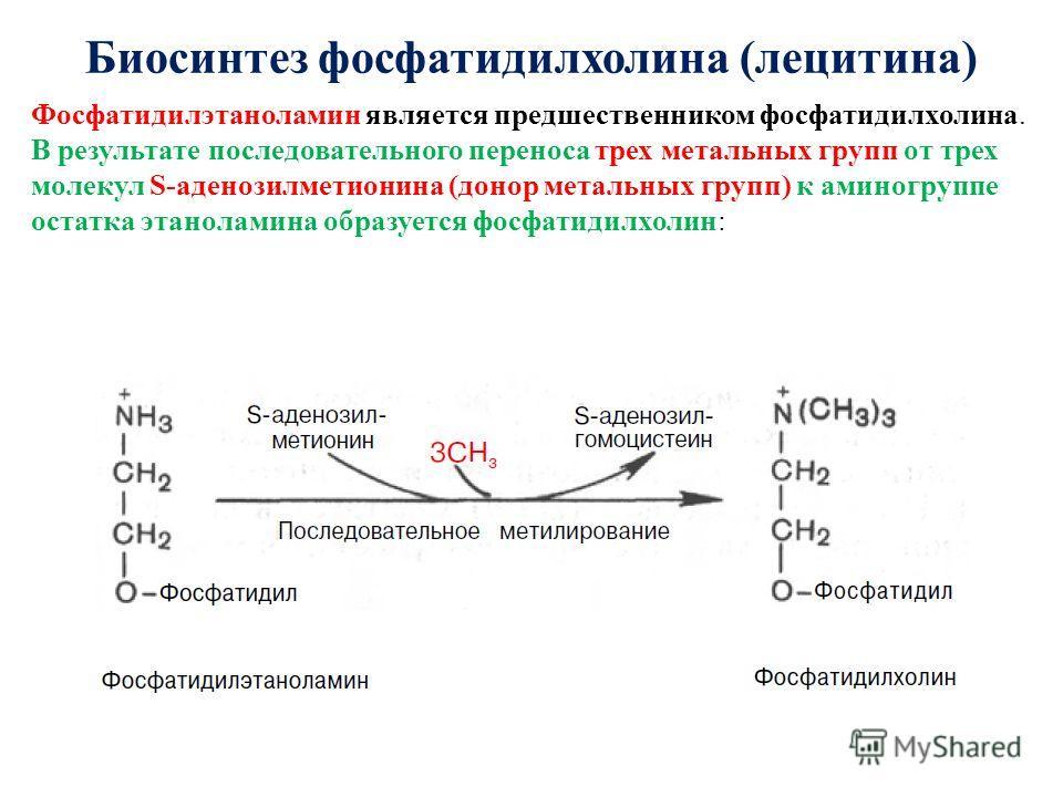Биосинтез фосфатидилхолина (лецитина) Фосфатидилэтаноламин является предшественником фосфатидилхолина. В результате последовательного переноса трех ме