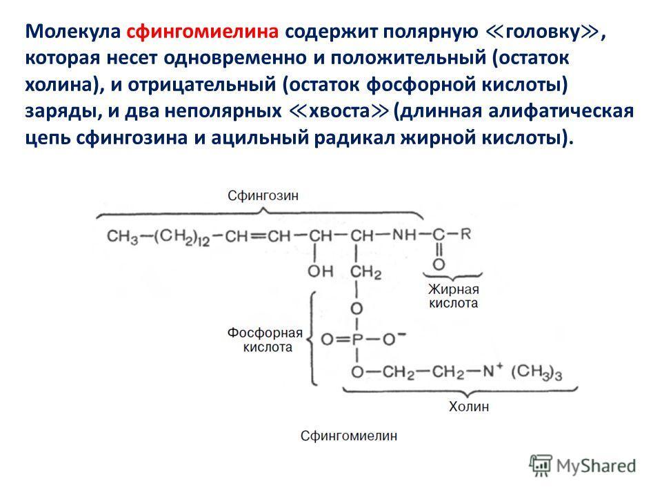 Молекула сфингомиелина содержит полярную головку, которая несет одновременно и положительный (остаток холина), и отрицательный (остаток фосфорной кислоты) заряды, и два неполярных хвоста (длинная алифатическая цепь сфингозина и ацильный радикал жирно