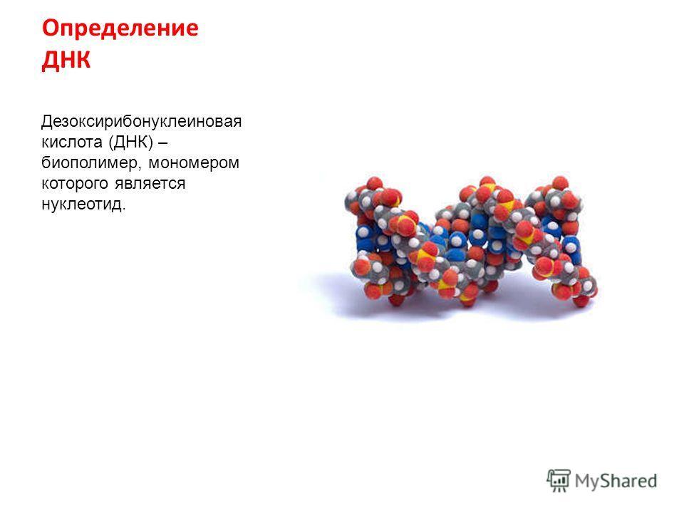 Определение ДНК Дезоксирибонуклеиновая кислота (ДНК) – биополимер, мономером которого является нуклеотид.