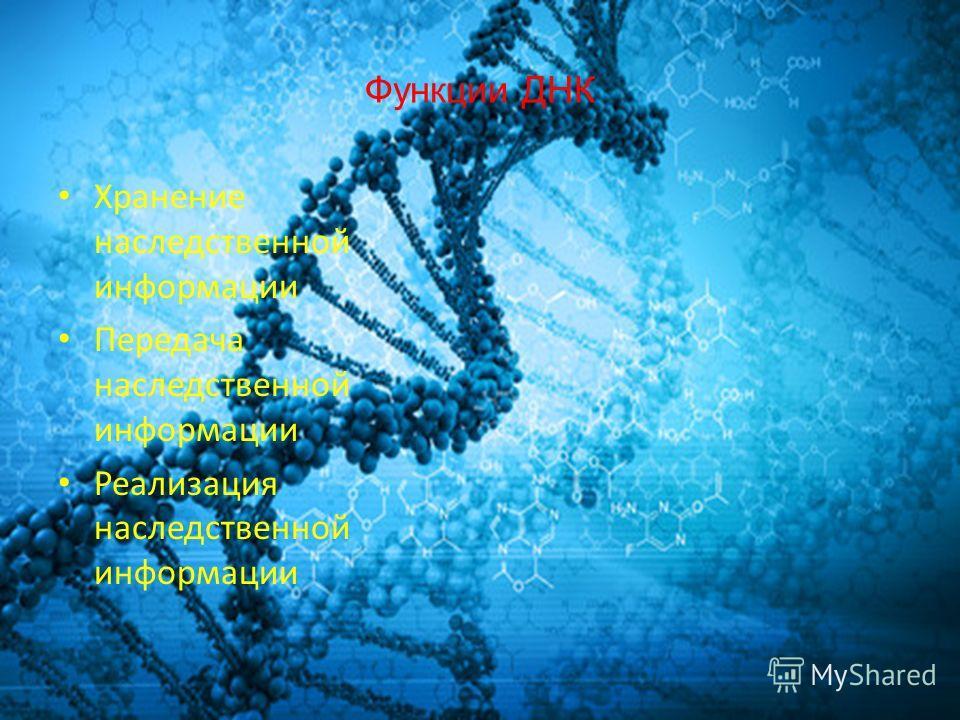 Функции ДНК Хранение наследственной информации Передача наследственной информации Реализация наследственной информации