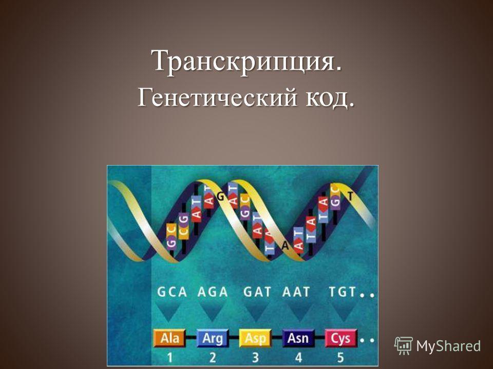 Транскрипция. Генетический код.